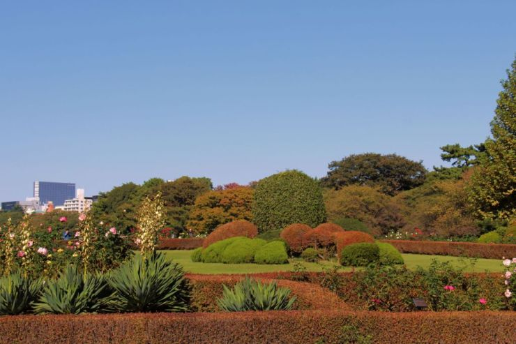 shinjuku-gyoen-garden-63