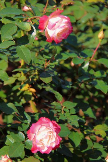 shinjuku-gyoen-garden-64