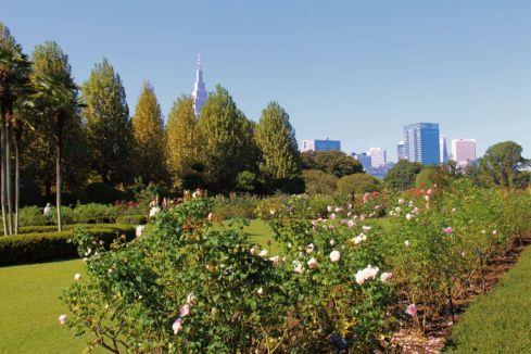 shinjuku-gyoen-garden-65
