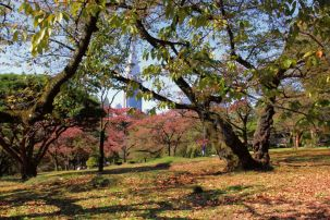 shinjuku-gyoen-garden-67