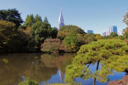 shinjuku-gyoen-garden-71
