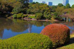shinjuku-gyoen-garden-72