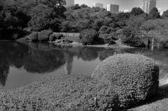 shinjuku-gyoen-garden-73