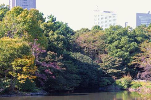 shinjuku-gyoen-garden-75