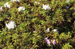 shinjuku-gyoen-garden-79