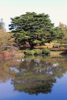 shinjuku-gyoen-garden-81