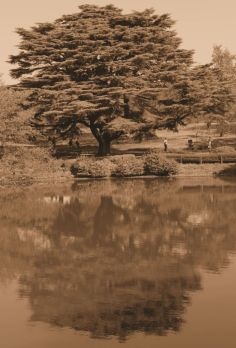 shinjuku-gyoen-garden-82