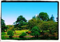 shinjuku-gyoen-garden-84