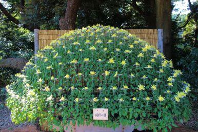 shinjuku-gyoen-garden-86