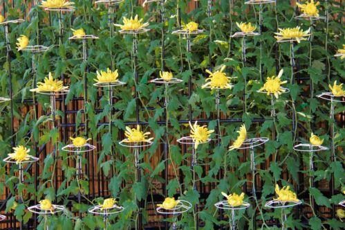 shinjuku-gyoen-garden-87