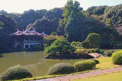 shinjuku-gyoen-garden-88