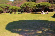 shinjuku-gyoen-garden-89