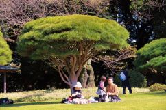 shinjuku-gyoen-garden-90