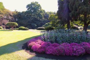 shinjuku-gyoen-garden-92