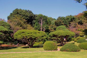 shinjuku-gyoen-garden-93