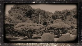 shinjuku-gyoen-garden-94