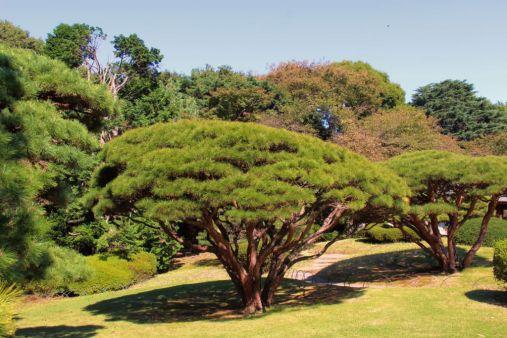 shinjuku-gyoen-garden-95