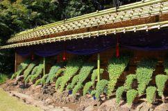 shinjuku-gyoen-garden-97