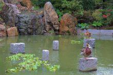 shofuku-ji-temple-21