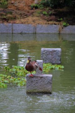 shofuku-ji-temple-22