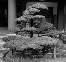 tocho-ji-temple-21