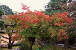 toji-in-temple-4