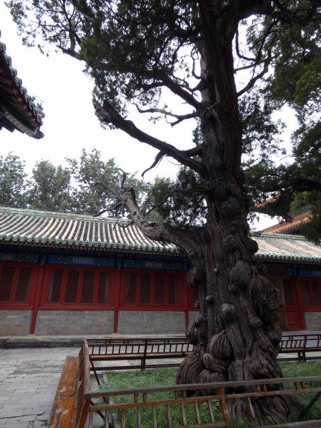 Confuciustempel (39)