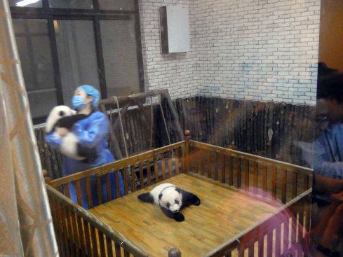 Giant Panda Research Centre (35)