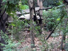 Giant Panda Research Centre (37)