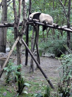 Giant Panda Research Centre (41)