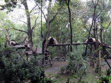 Giant Panda Research Centre (44)