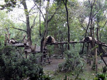 Giant Panda Research Centre (44)