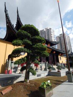 Jade Buddha Temple (7)