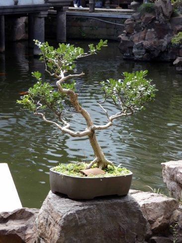 Yu Garden (18)