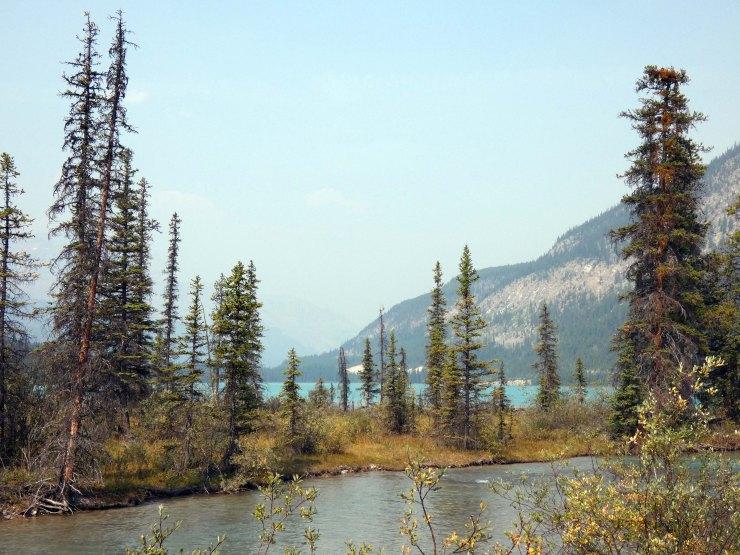 Waterfowl Lake (6)