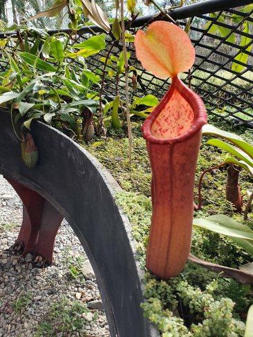 Jardin Botanico de Quindio (10)