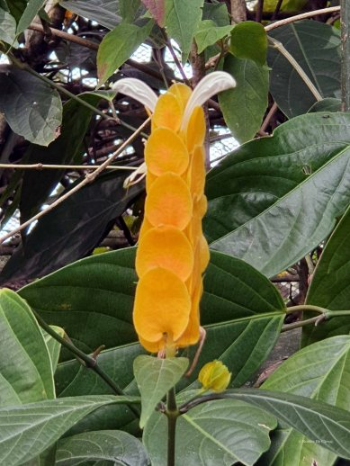 Jardin Botanico de Quindio (12)