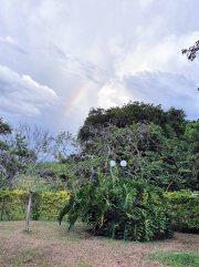 Jardin Botanico de Quindio (19)