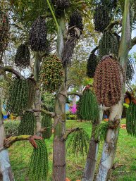 Jardin Botanico de Quindio (22)