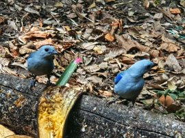 Jardin Botanico de Quindio (24)