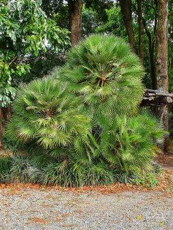 Jardin Botanico de Quindio (28)