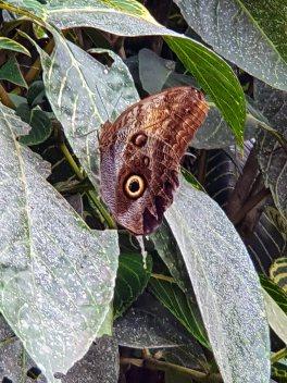 Jardin Botanico de Quindio (33)