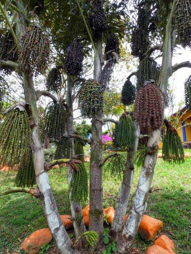 Jardin Botanico de Quindio (36)