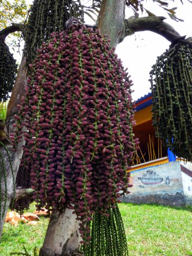 Jardin Botanico de Quindio (37)