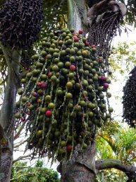Jardin Botanico de Quindio (38)