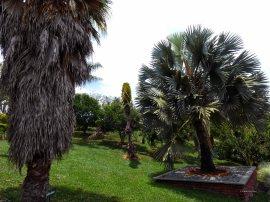 Jardin Botanico de Quindio (39)