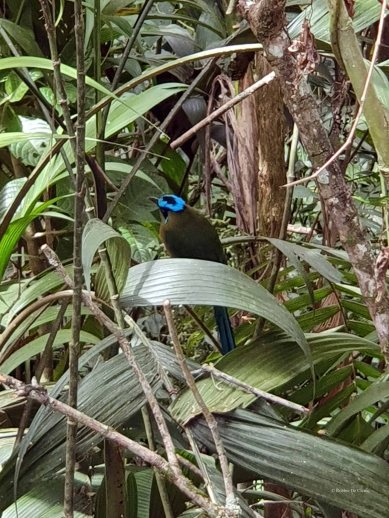 Jardin Botanico de Quindio (4)