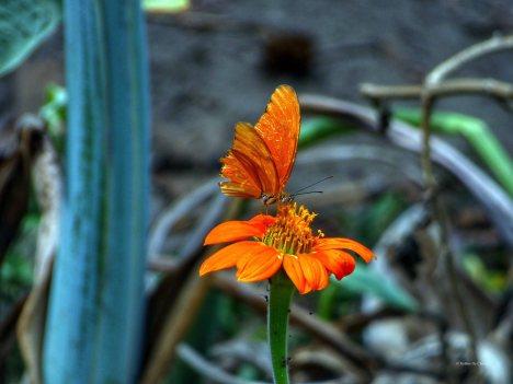 Jardin Botanico de Quindio (48)