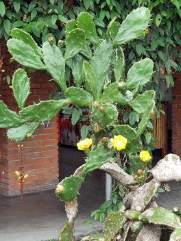 Jardin Botanico de Quindio (6)