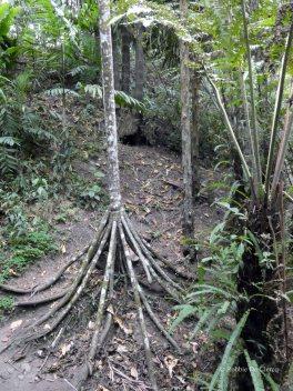 Jardin Botanico de Quindio (61)